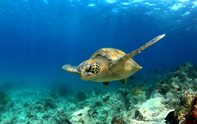 4 - Snorkelling with Sea Turtles